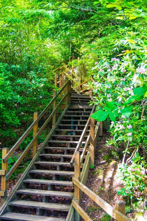 Escada às quedas de Whitewater imagens de stock