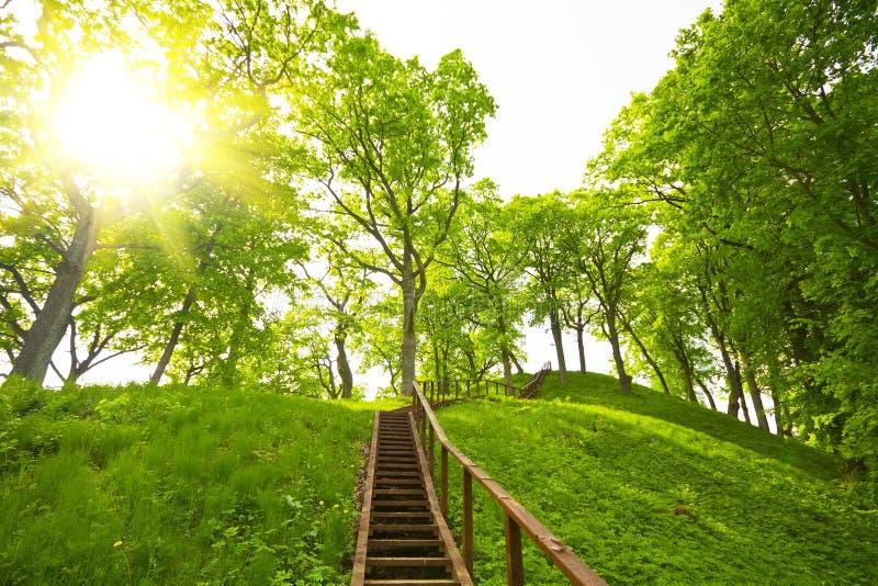 Escada ao monte, verão foto de stock