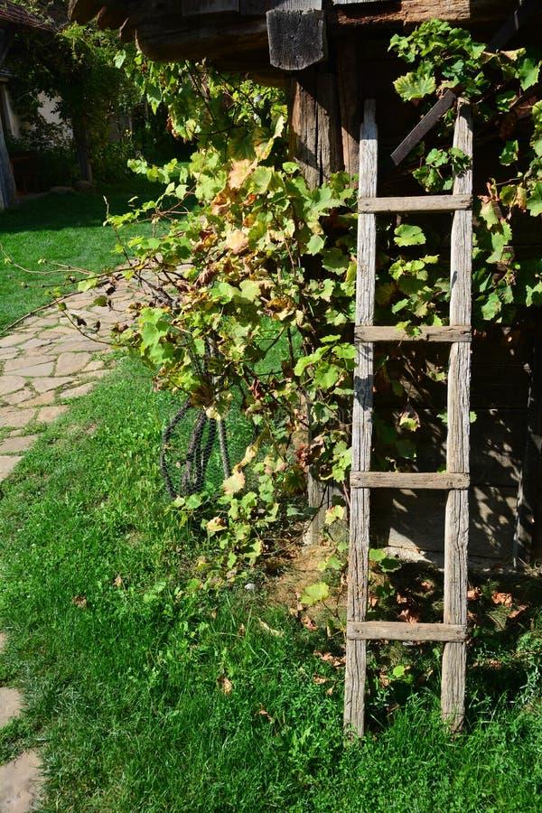 Escada de madeira pela vinha fotos de stock