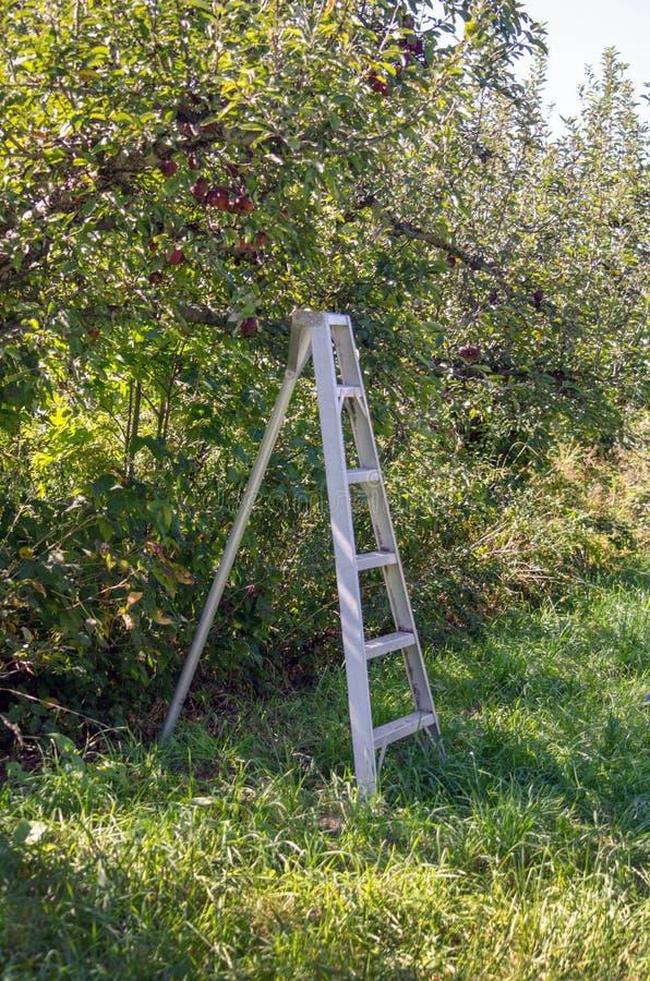 Escada do metal no pomar de maçã imagens de stock