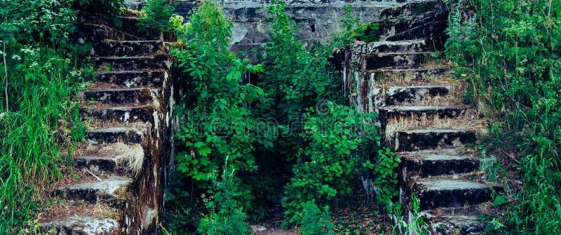 Escadaria de pedra na floresta fotos de stock