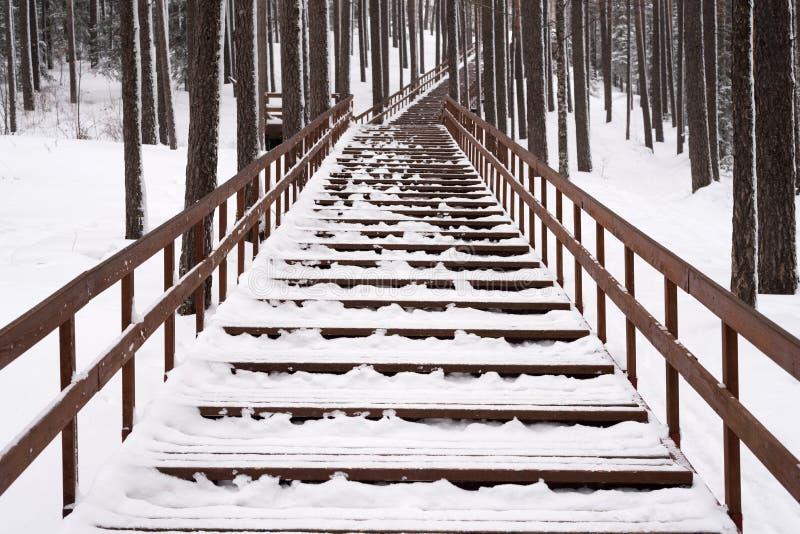 Escadaria em uma floresta do inverno imagem de stock