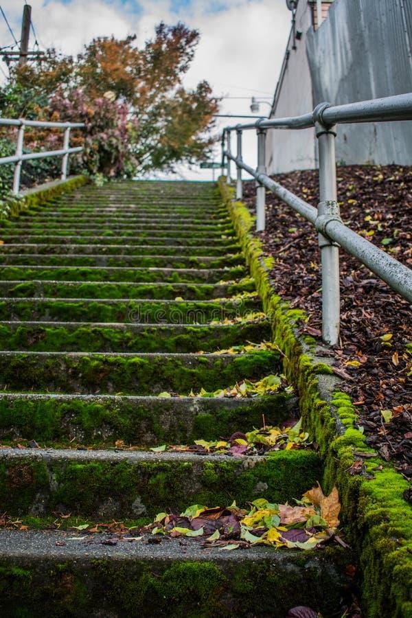 Escadaria musgoso na cidade fotos de stock
