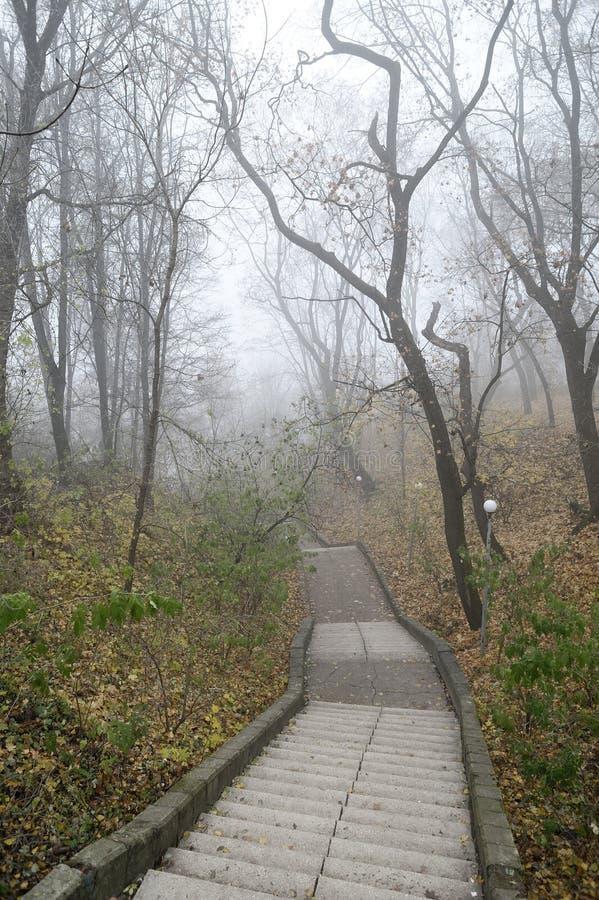 Escadaria velha vazia no parque enevoado Landsca nevoento deprimido sereno imagens de stock