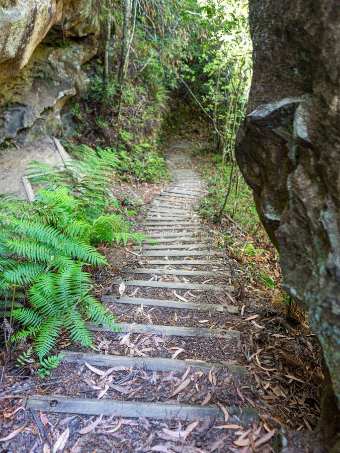 Escadas assustadores nas madeiras Austrália imagem de stock royalty free