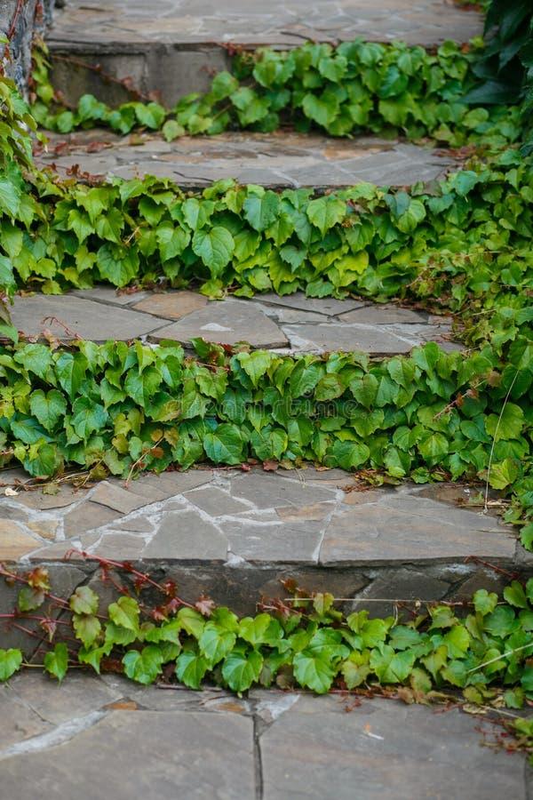 Escadas com ramo fotos de stock