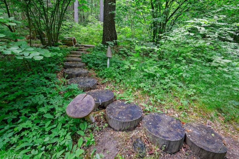 Escadas de madeira na fuga de caminhada da natureza na floresta, Finlandia fotos de stock
