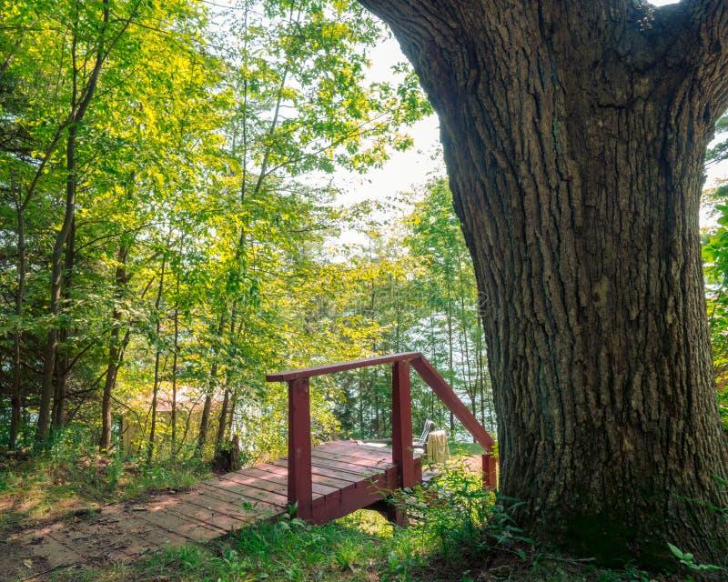 Escadas de madeira velhas em uma casa de campo ao lado da grande árvore imagem de stock