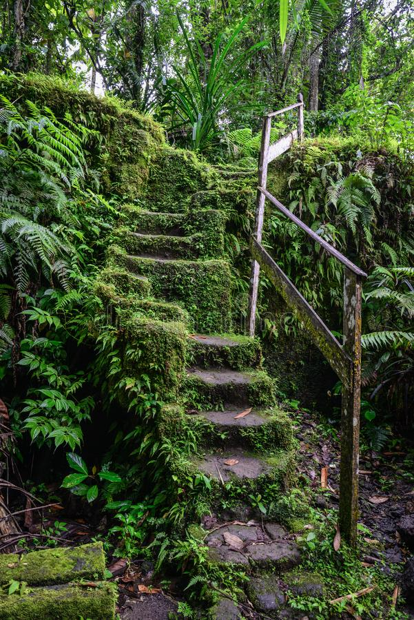 Escadas de pedra velhas no jardim coberto de vegetação da floresta imagem de stock