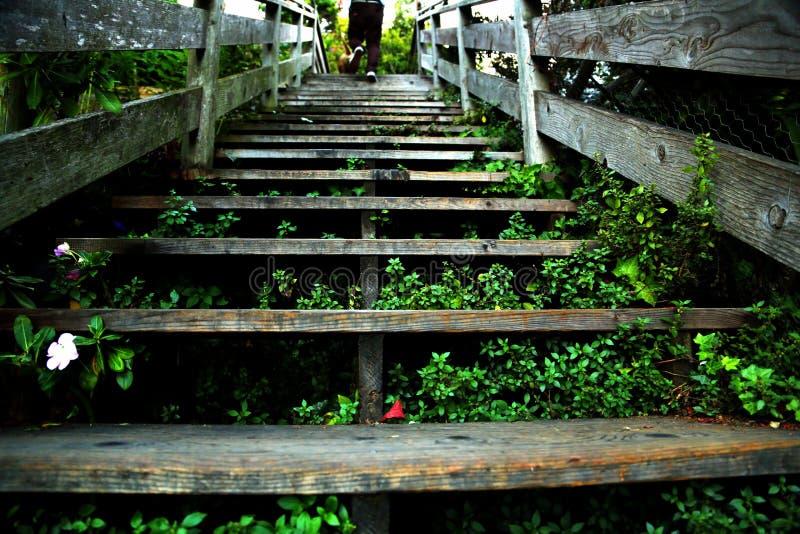 Escadas de San Francisco imagens de stock royalty free