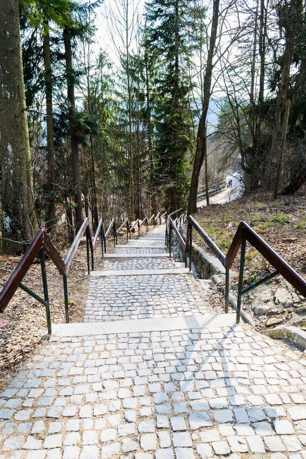 Escadas do ar livre que vão para baixo, corrimão pavimentado e de madeira de pedra cúbico cercado por árvores imagem de stock royalty free
