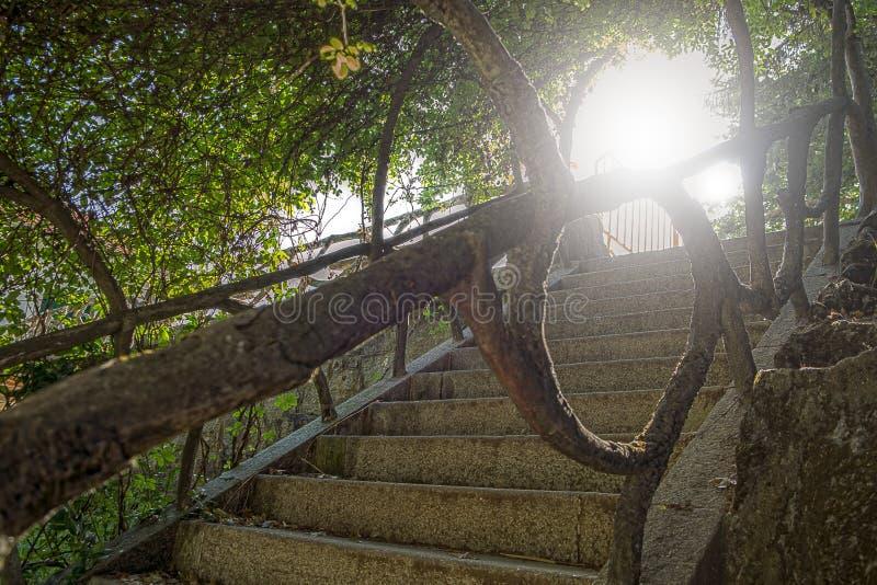 Escadas medievais com vegetação fotos de stock