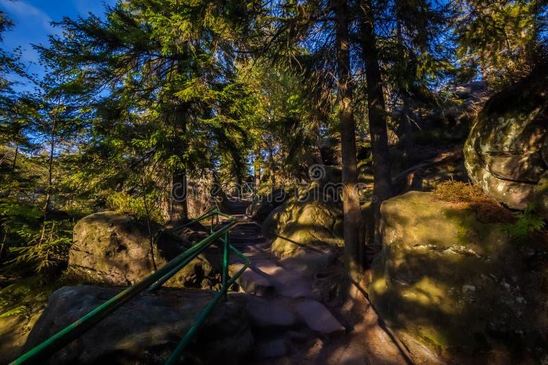 Escadas na floresta verde a Szczeliniec Wielki em montanhas de Stolowe do parque nacional, Sudety, Polônia imagem de stock royalty free
