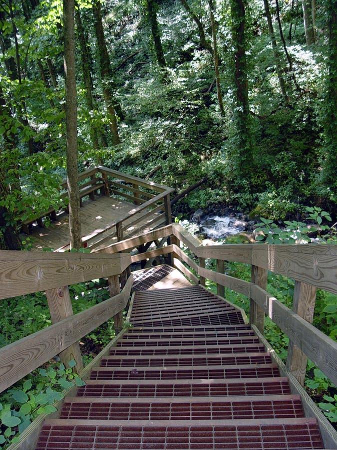 Escadas nas madeiras imagens de stock