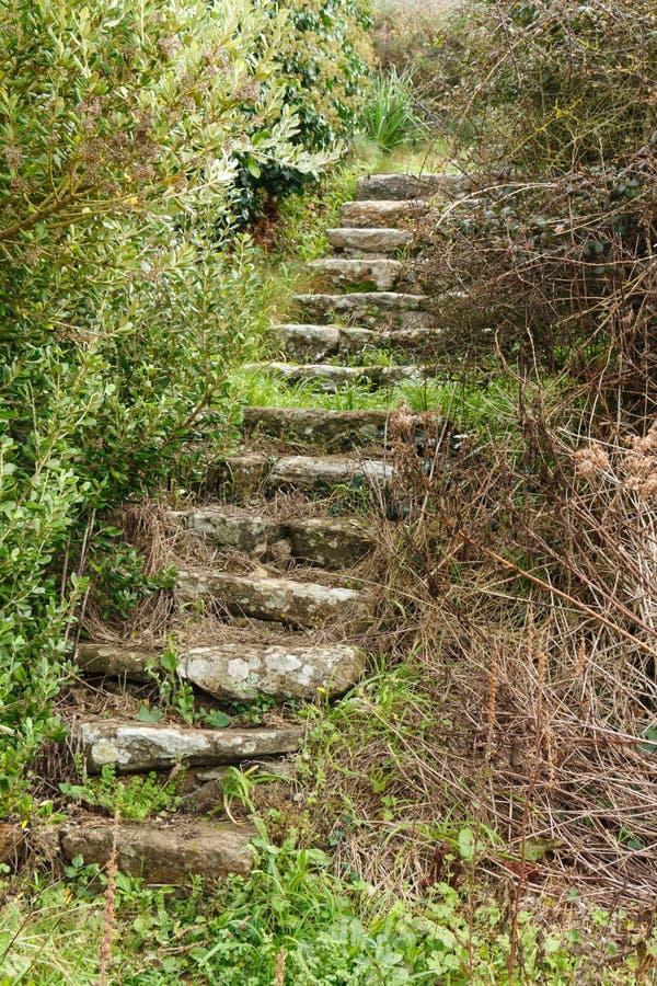Escadas velhas em desuso na vegetação imagens de stock