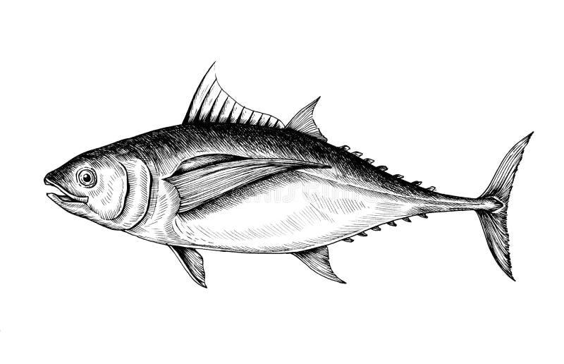 Escala cinzenta tirada mão de peixes de atum ilustração do vetor