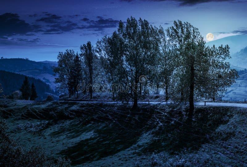 Escala de árvores de álamo pela estrada no montanhês na noite fotos de stock royalty free