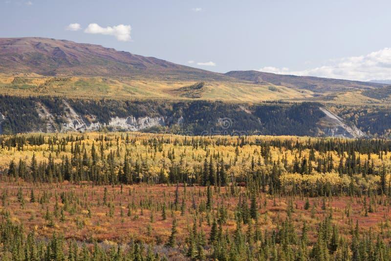 Escala de Alaska em Denali foto de stock royalty free