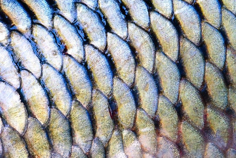 Escala de pescados imagen de archivo