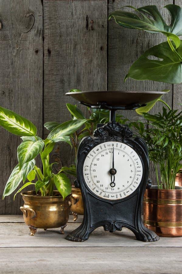 Escala velha da cozinha do vintage no fundo cinzento de madeira fotos de stock