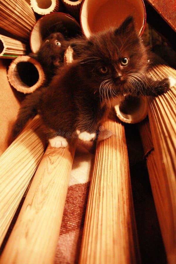 escalador de roca del gatito fotografía de archivo