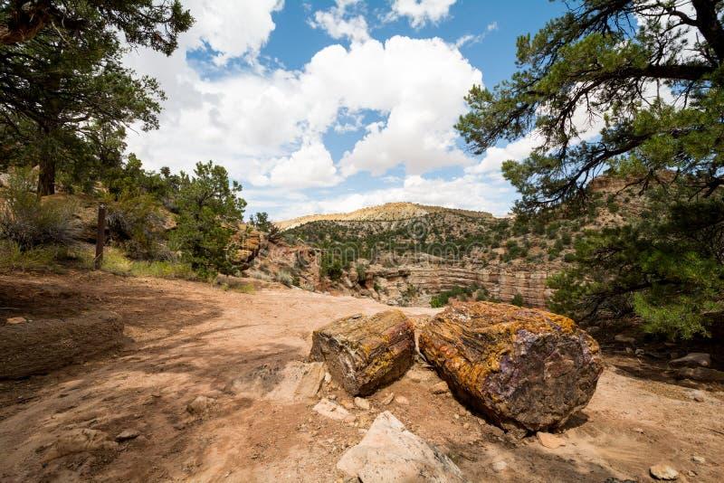 Escalante окаменевал парк штата в Юте, США стоковое фото