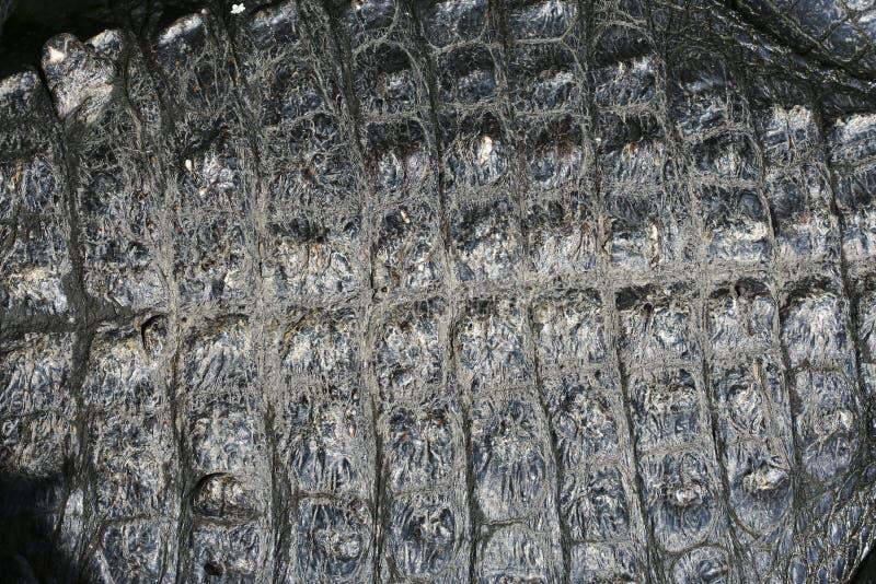 Escalas de la piel del cocodrilo fotos de archivo libres de regalías