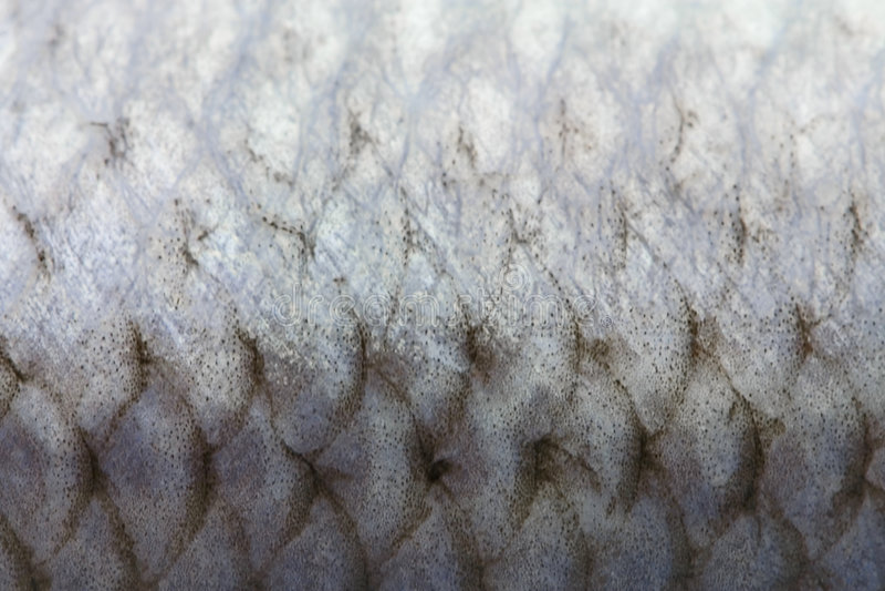 Escalas de pescados imágenes de archivo libres de regalías