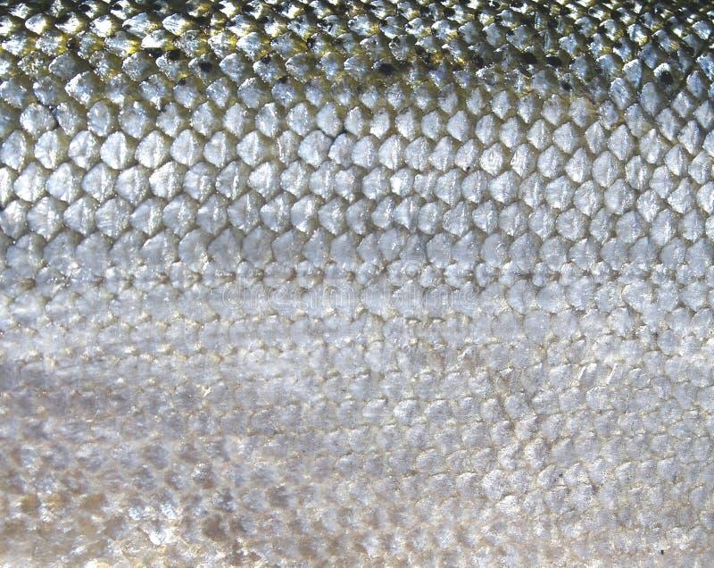 Escalas de pescados fotos de archivo libres de regalías