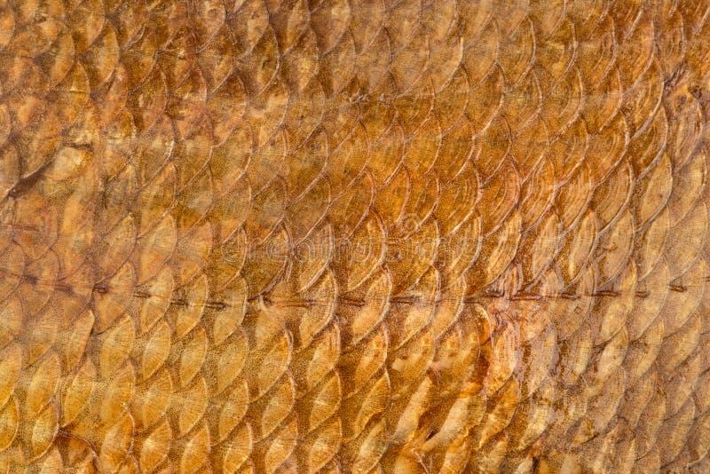 Escalas de pescados ahumados imagenes de archivo