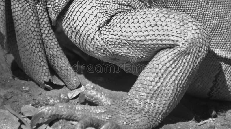 Escalas do lagarto fotografia de stock