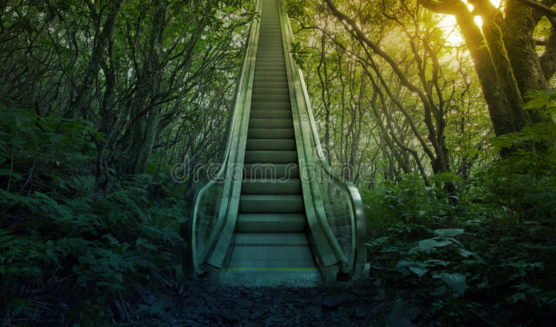 Escalator in the forest royalty free stock image