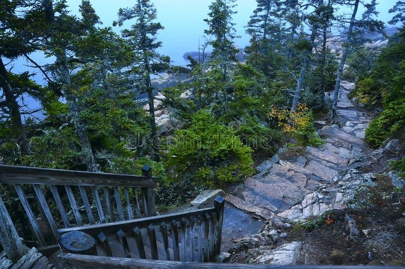 Escalera de madera que lleva al camino rocoso entre árboles de pino grandes a la costa del océano imagenes de archivo