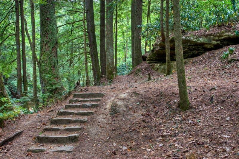 Escalera de piedra vieja en las maderas místicas imagen de archivo