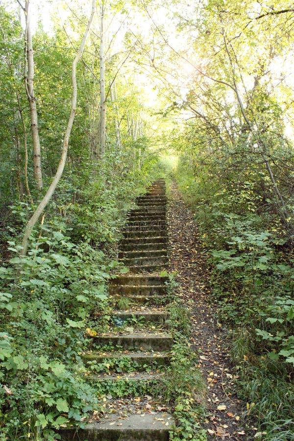 Escalera en bosque imagenes de archivo