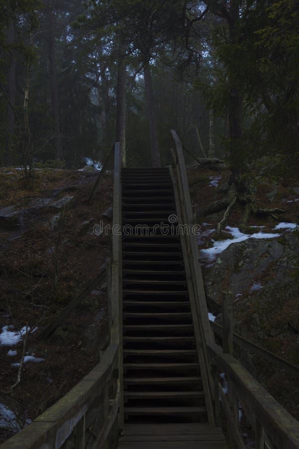 Escalera encima de una montaña, a una reserva de naturaleza del bosque en Suecia imagenes de archivo