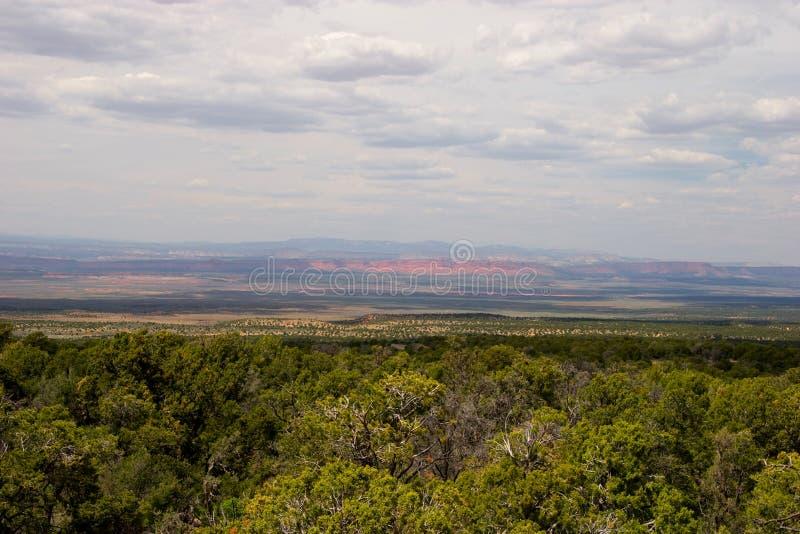 Escalera magnífica del punto de vista en el bosque del Estado de Kaibab, Arizona fotografía de archivo