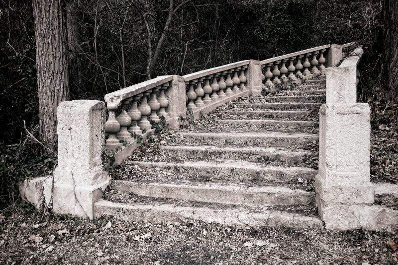 Escalera monumental abandonada en maderas Overgrown imagen de archivo libre de regalías