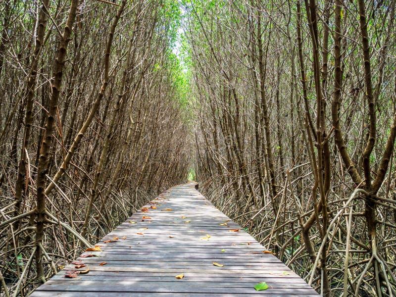 Escalera que lleva al mangle tropical en la orilla de mar fotografía de archivo libre de regalías