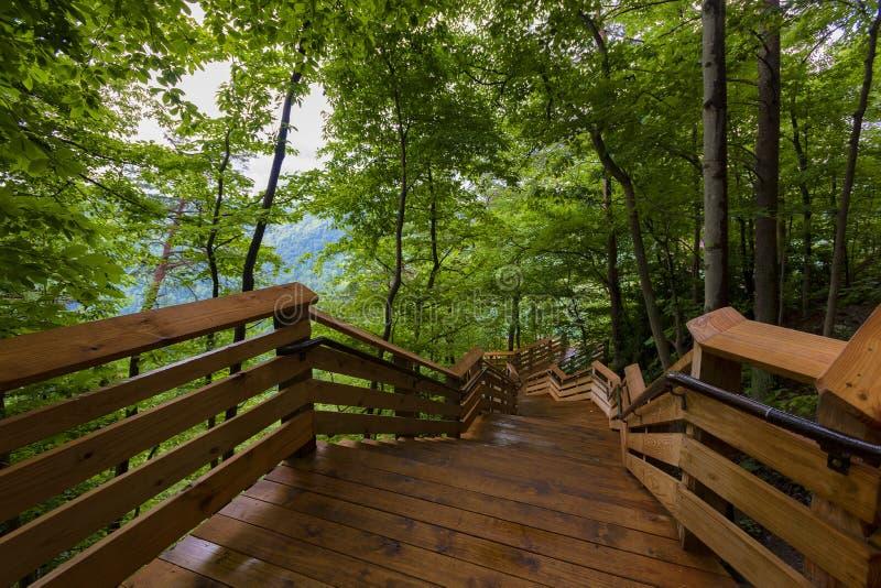 Escalera que lleva a la plataforma de observación en el parque nacional del nuevo río foto de archivo