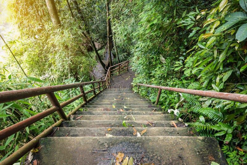 Escaleras altas y escarpadas dentro del bosque fotos de archivo