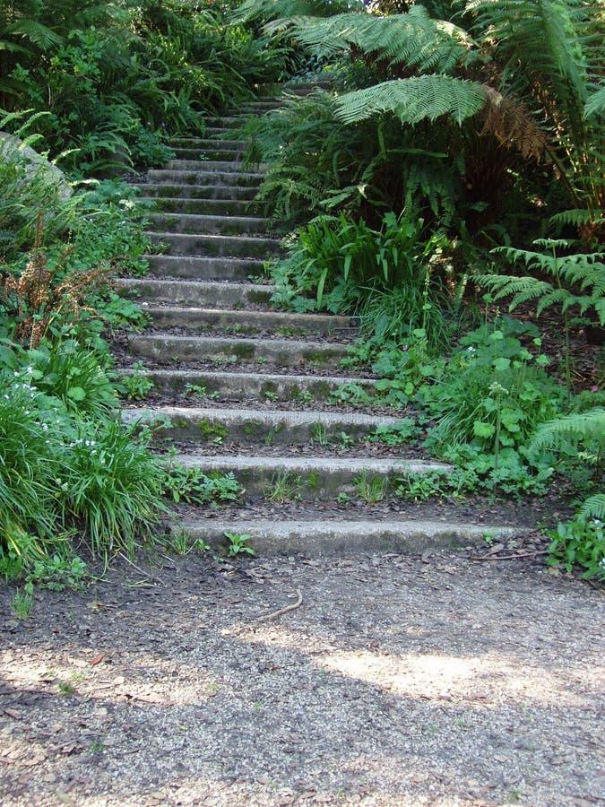 Escaleras De La Arboleda Fotos de archivo libres de regalías