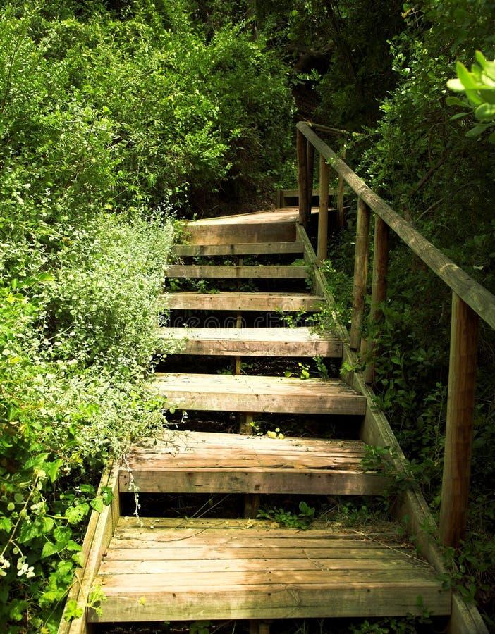 escaleras de madera en arbustos verdes imagen de archivo