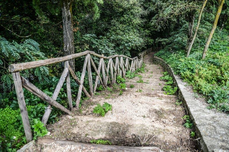 Escaleras de madera/trayectoria a través del bosque imágenes de archivo libres de regalías