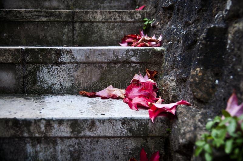 Escaleras de piedra - concepto del parque y del jardín del otoño fotos de archivo libres de regalías