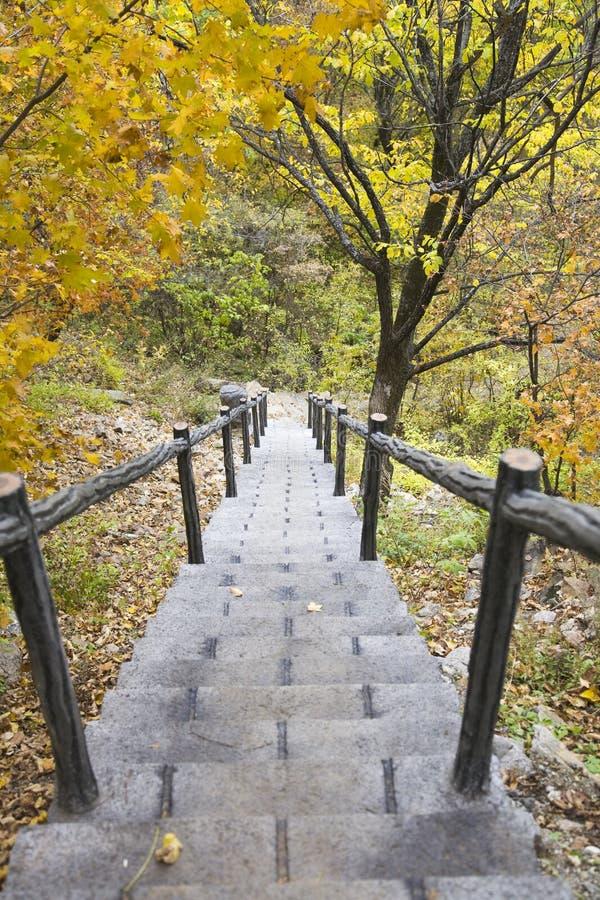 Escaleras de piedra en bosque imágenes de archivo libres de regalías
