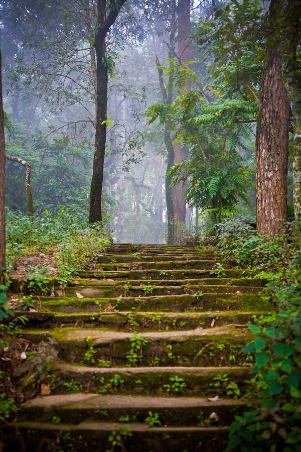 Escaleras de piedra en el bosque imagenes de archivo