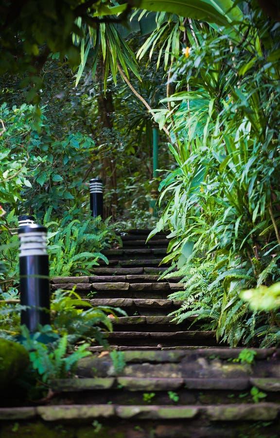 Escaleras de piedra en el bosque fotos de archivo libres de regalías