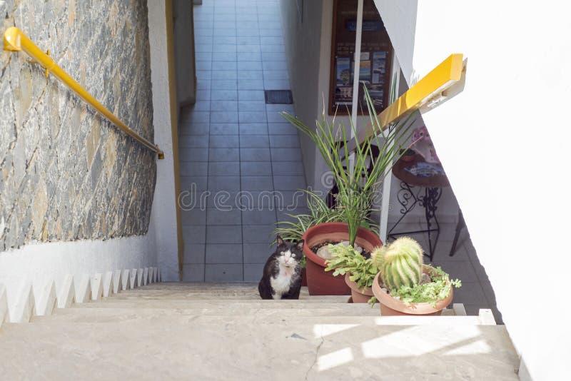 Escaleras de retirada asustadas del gato blanco negro foto de archivo