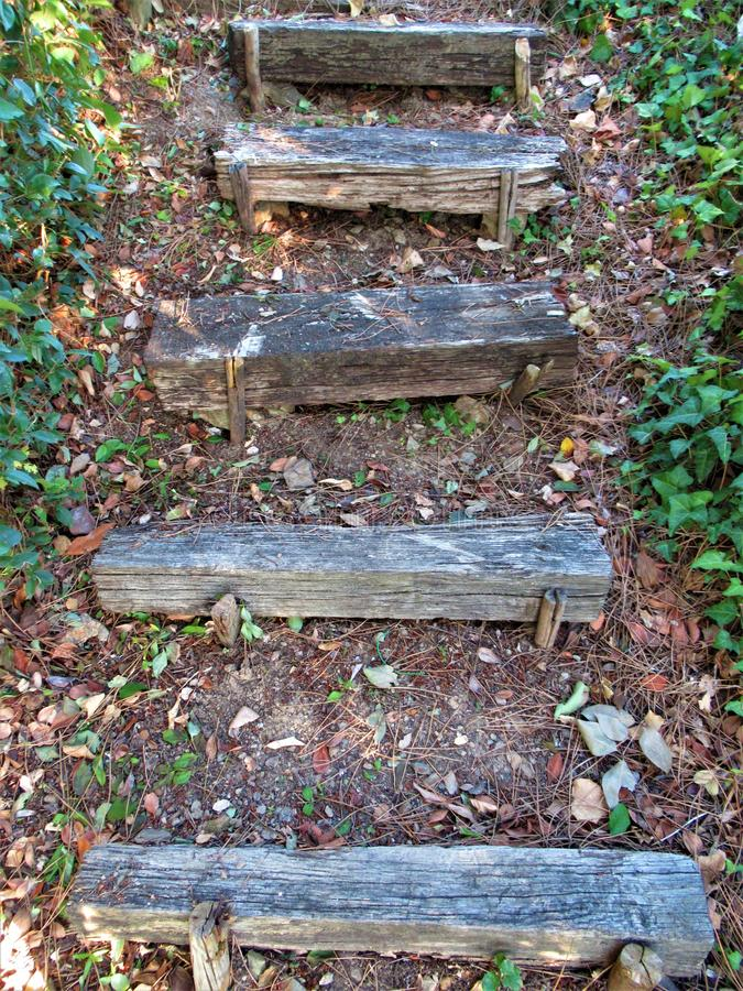 Escaleras de Wodden en un bosque foto de archivo